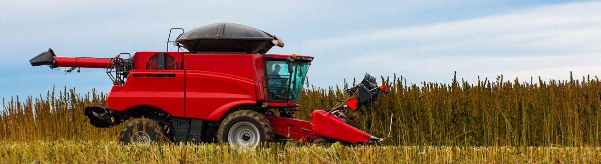 Combine-harvesting-Hemp-Klein